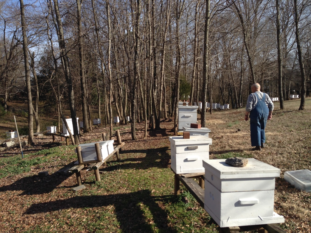 St. Dominic's Bee Farm