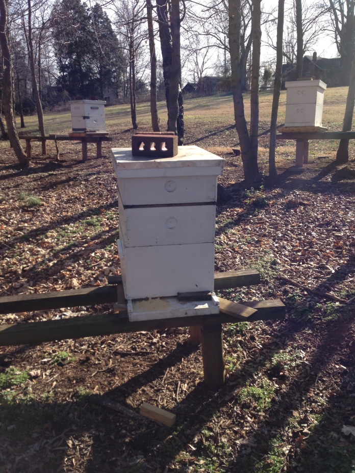 Bee Box at St. Dominic's Honey