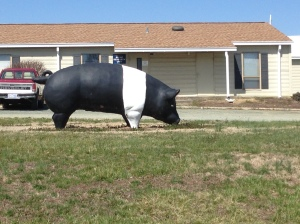 The NC A&T Swine Farm Hog Statue